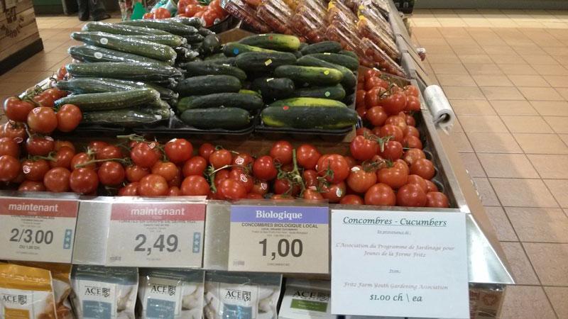 Fritz-Farm-cucumbers