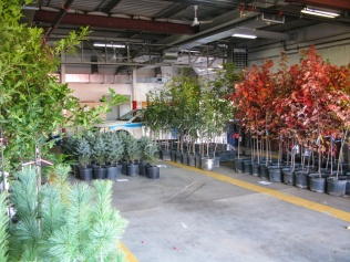 Free trees for the citizens at Environment Day