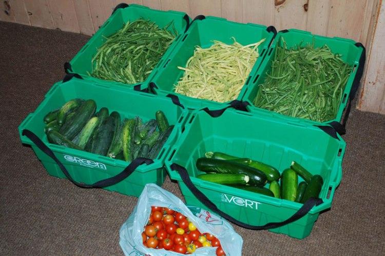 Fritz-Garden-Harvest-160730B