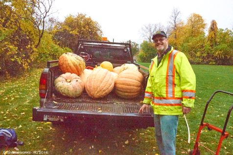 Winning pumpkins ready for distribution to the homes of their growers